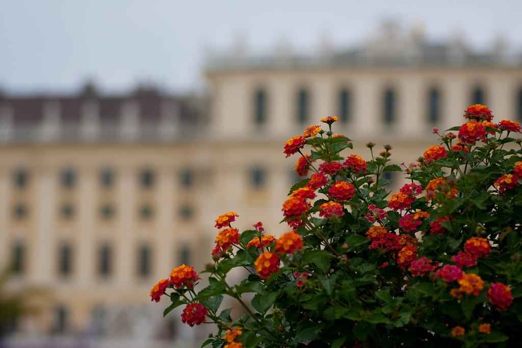 Blumen vor Schloss Schönbrunn